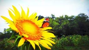 Poder amarelo Imagens de Stock Royalty Free