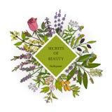 Poder das ervas para a beleza natural ilustração do vetor