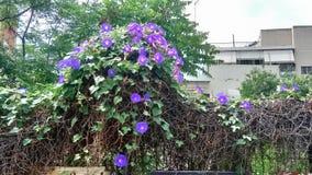 Poder das flores fotos de stock