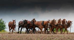 Poder de cavalo Imagens de Stock Royalty Free