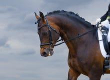 Poder de cavalo Fotografia de Stock