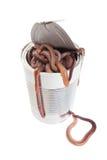 Poder de gusanos Fotografía de archivo libre de regalías