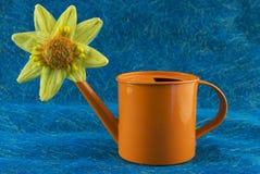 Poder de la flor Fotografía de archivo libre de regalías