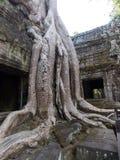 Poder de la naturaleza, Angkor Wat fotos de archivo libres de regalías