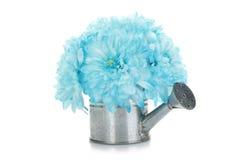 Poder de riego con las flores azules Fotografía de archivo