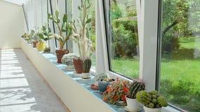 Poder de riego del cactus