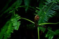 Poder del helecho verde Foto de archivo