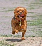 ¡poder del perrito! imagenes de archivo