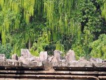 Poder y naturaleza entre ruinas en el templo de Sun, Konark Odisha Foto de archivo