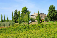 Podere 47 Royalty Free Stock Photos