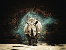 Poderoso como o rinoceronte Fotografia de Stock