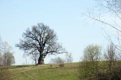 podesłania drzewo Obraz Stock
