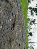 Podeszczowa świeżość deszczem po długiego tine Fotografia Stock