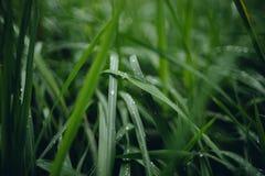 Podeszczowa kropla na zielonych trawach przy chmurzącym dniem obraz royalty free