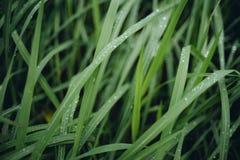 Podeszczowa kropla na zielonych trawach przy chmurzącym dniem fotografia royalty free