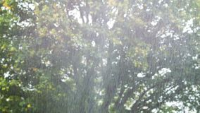 Podeszczowa prysznic