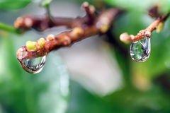 Podeszczowa wodna kropelka Obrazy Royalty Free