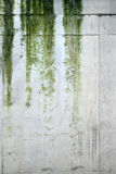 podeszczowe tekstury Fotografia Royalty Free