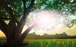 Podeszczowego drzewa i słońca jaśnienie na niebie z słonecznikami odpowiada backg Obraz Royalty Free