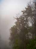 Podeszczowego forest/drzewa obrazy stock