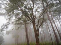Podeszczowego forest/drzewa obraz stock