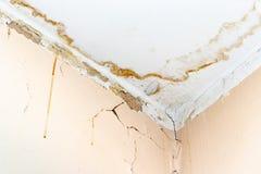 Podeszczowej wody przecieki na suficie przez uszkadzaj?cego dachowego powoduje gnicia, strugaj?cy farb? i ple?niowy fotografia royalty free