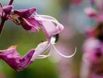Podeszczowi kropla kwiaty obraz stock