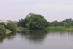 Podeszczowy drzewo w basenu widoku fotografia stock