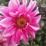 Podeszczowy kwiat Zdjęcia Stock