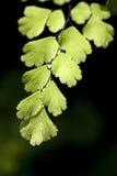 podeszczowy liść światło słoneczne Zdjęcia Royalty Free