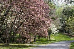 podjazd wiosna obraz royalty free
