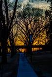Podkłada ogień palenie gdy słońce ustawia na ścieżce ich drzewa zdjęcia royalty free