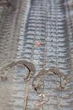 Podkowa ślada w brudzie Obraz Stock