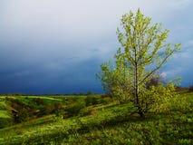 Podkreślający drzewo Zdjęcie Stock