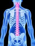 Podkreślający kręgosłup ilustracja wektor