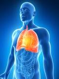 Podkreślający męski płuco Obrazy Royalty Free