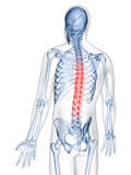 Podkreślający rdzeń kręgowy ilustracja wektor