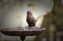 Podkuty trwanie ptak obraz stock