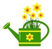 Podlewań daffodils i puszka Fotografia Royalty Free