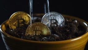 Podlewanie bitcoins w garnku