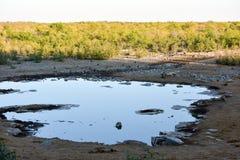 Podlewanie dziura - Etosha, Namibia Zdjęcie Royalty Free