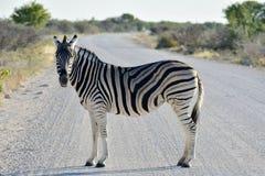 Podlewanie dziura - Etosha, Namibia Obrazy Stock
