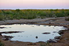 Podlewanie dziura - Etosha, Namibia Fotografia Stock