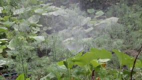 podlewanie ogrodu zdjęcie wideo