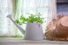 Podlewanie puszka pełno świezi ziele w kuchni Obraz Stock