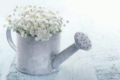 Podlewanie puszka wypełniająca z białymi kwiatami zdjęcia stock