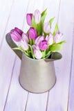 Podlewanie puszka z purpurowymi tulipanami Zdjęcia Royalty Free