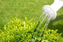 Podlewanie puszki dolewania woda na trawie. obraz stock