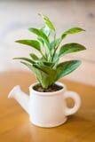 Podlewanie roślina i Obraz Stock