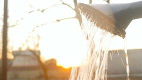 Podlewanie rozsady w szklarni ręcznie zbiory